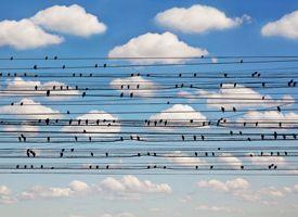Cantus Arcticus - Concerto for Birds I