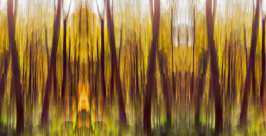 Wild forest II