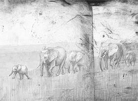 Elephants artwork I