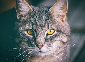 Cute Cat Portrait