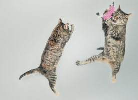 Kitty Dance