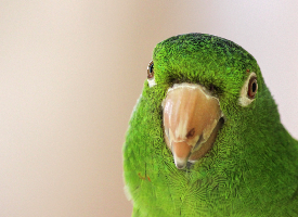 Green bird hello