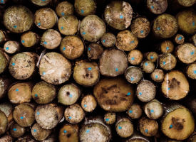 Wood With Blue Dots